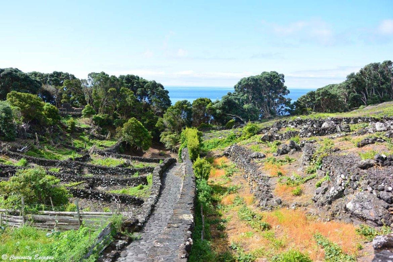 Potagers dans les roches volcaniques aux Açores