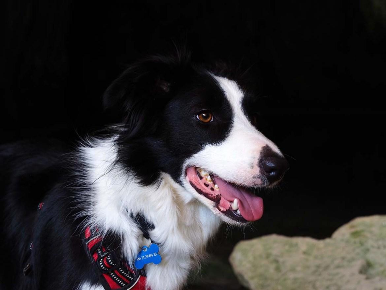 Portrait de chien à l'entrée de la grotte