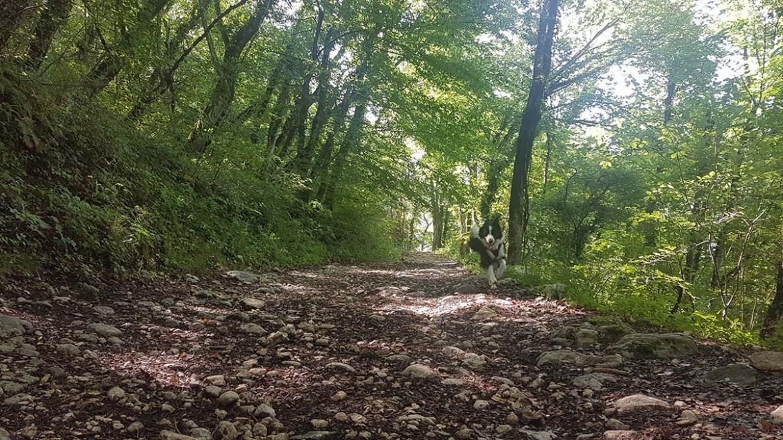 Randonner en forêt avec son chien