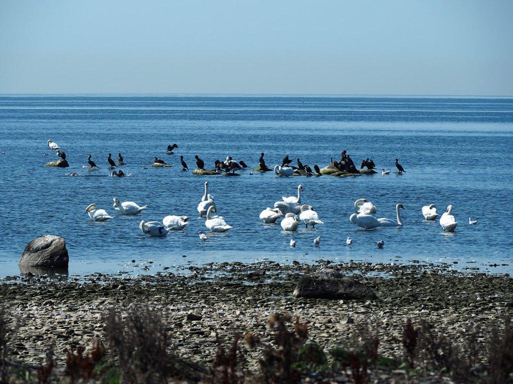Réserve protégée d'oiseaux migrateurs sur l'île d'Öland, Suède