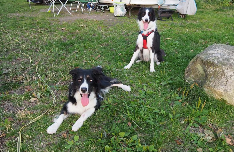 Sympathiser avec des chiens en Suède
