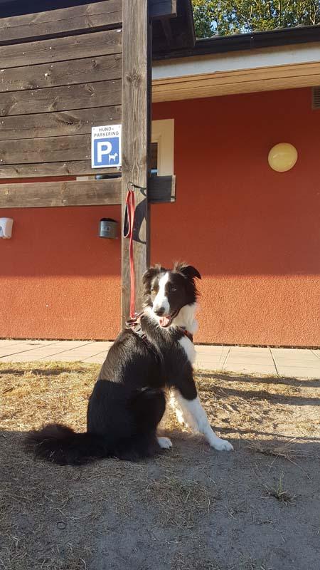 Parking pour chiens dans un camping suédois