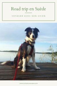 Faire un road trip en Suède avec son chien, conseils pratiques