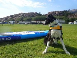 Faire du paddle avec son chien dans le Bohuslän, en Suède