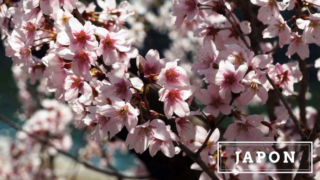 Articles de blog sur le Japon