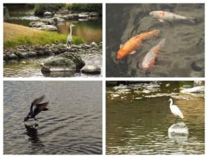Rencontres animales au jardin Suizenji de Kumamoto, Japon