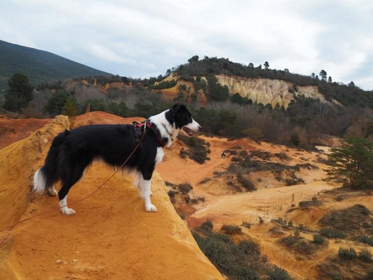 Les ocres de Rustrel avec son chien