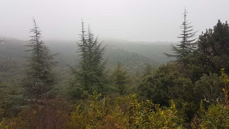 Panorama brumeux depuis la forêt des cèdres