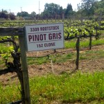 J Pinot Grigio