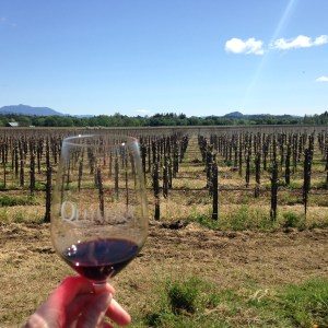 Quivera vineyard