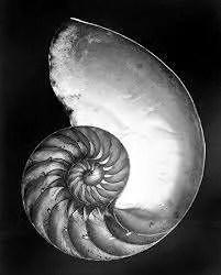 Edward Weston8