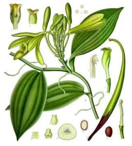 Liquore Crema di Cacao E Vaniglia Fatto in Casa Ricetta 0