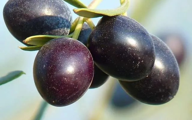 Grappa Dolce alle Olive Ricetta