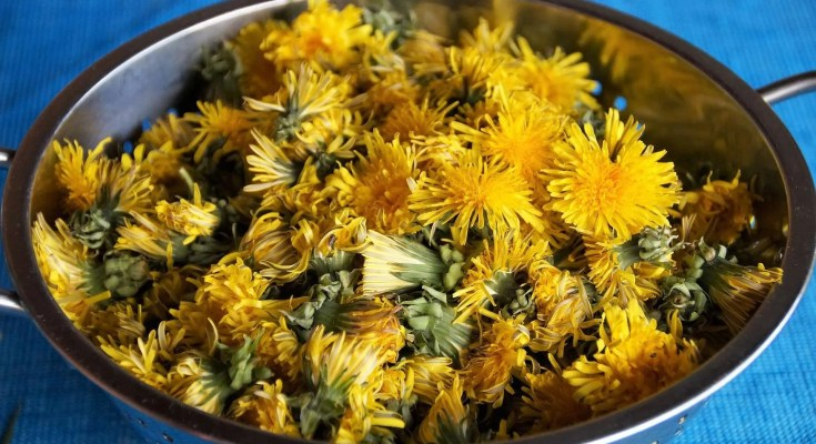 Fiori di tarassaco sotto aceto ricetta
