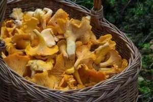 Funghi al naturale in vasetto ricetta