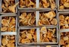 Funghi sott'olio in vasetto ricetta