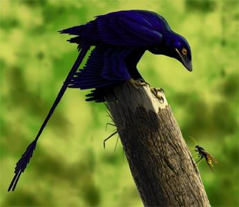 Microraptor[1]