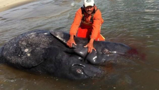 baleias01[1]