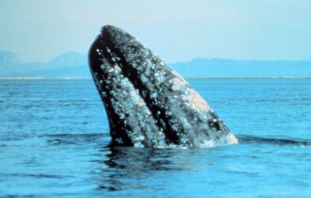 baleia[1]