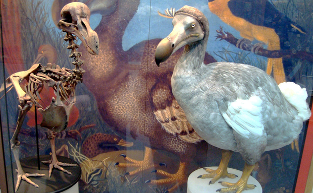 oxford_dodo_display[1]