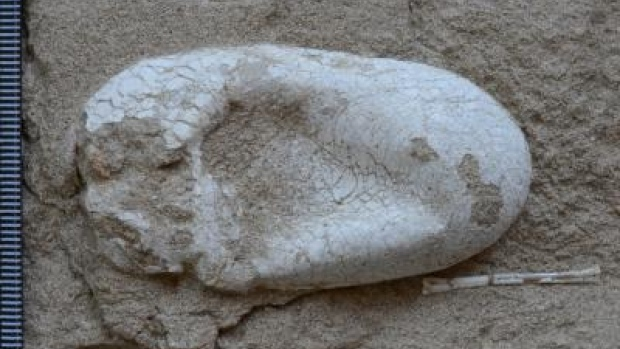 pterosaur-egg-hamipterus-tianshanensis[1]