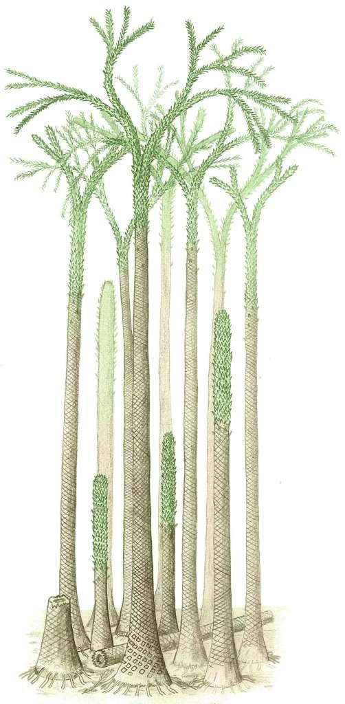 Árvores em floresta fossilizada