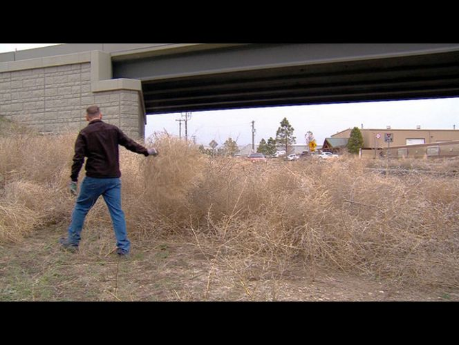 Tumbleweed Pictures