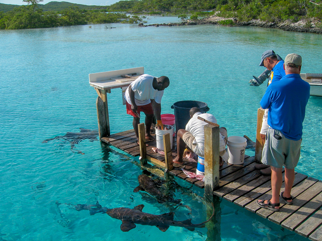 Famous Sharks of Compass Cay - Curious Gypsies Media