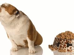 Curiouskeeda - Dog - Featured Image