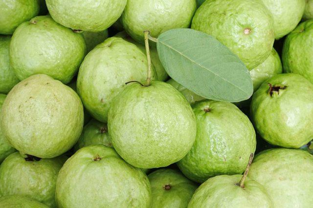 Curiouskeeda - Fruits - Guava