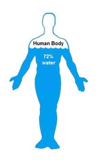 water in human body percentage