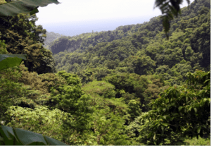 Dominica, Canopy View