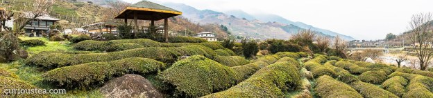 Dong Cheon Tea Field, Jirisan, Hwagae Valley, Hadong County, South Korea