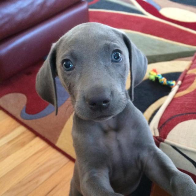 Curious Pup wanting to cuddle