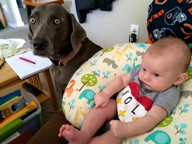 Curious Weims LOVE kids