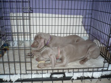 Pups in the crate
