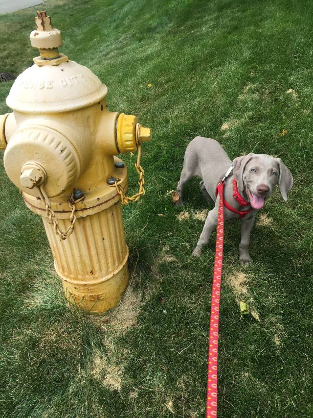 Kasper by the Fire Hydrant