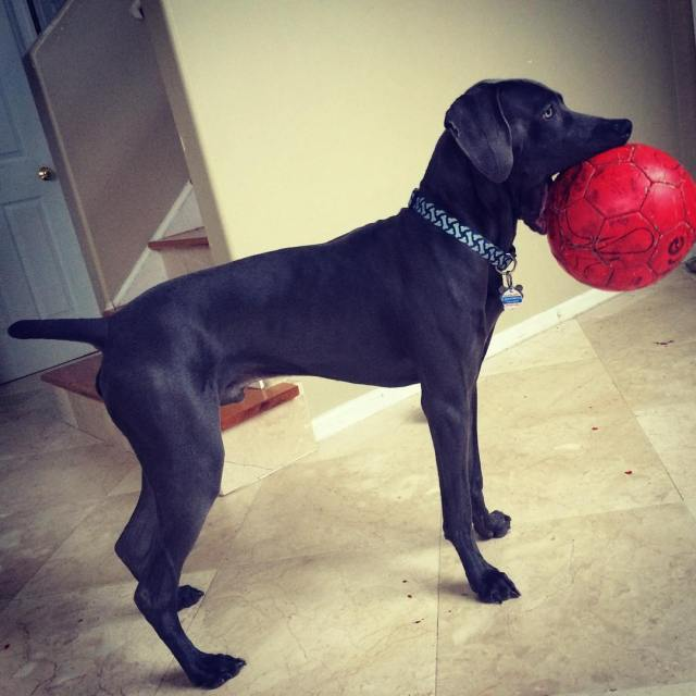 Maximus and his ball.
