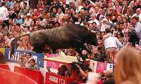 El toro pajarito saltando al tendido