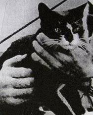 Oskar, el gato con suerte