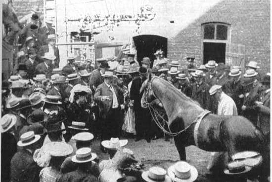 El caballo Clever Hans durante una exhibición