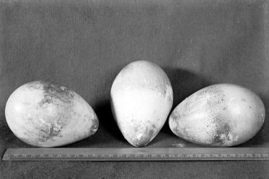 A la Antártida a por tres huevos de pingüino