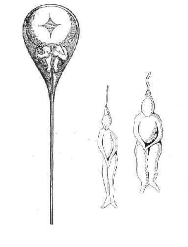 Hartsoeker, el científico que ilustró el espermatozoide con pequeñas personitas dentro