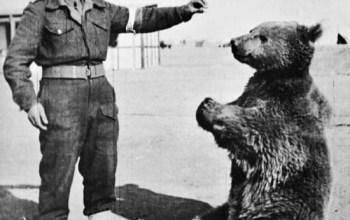 El oso que formó parte del ejército polaco
