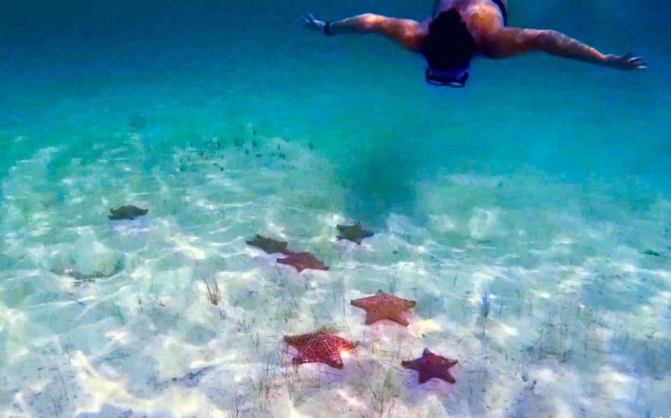 Etoile de Mer - Playa Estrellas à Cayo Jutias, Cuba
