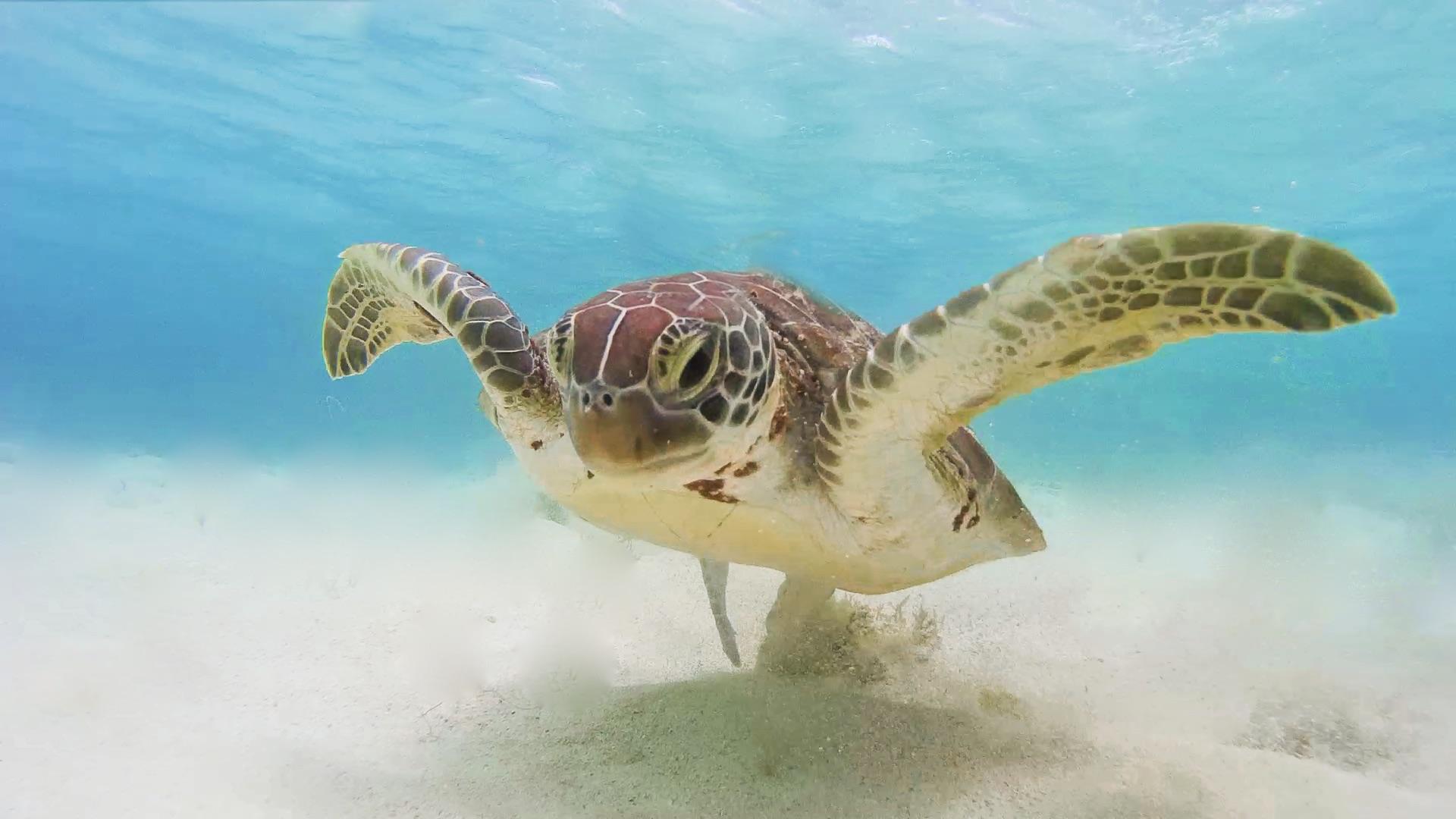 Tortue marine - Snorkeling à l'île de la petite terre - guadeloupe