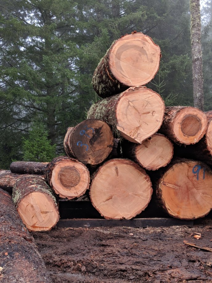 NOT GOOD: logs are stacked perpendicular to the access road