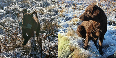 Trening på Trondsbu i vakkert vintervær