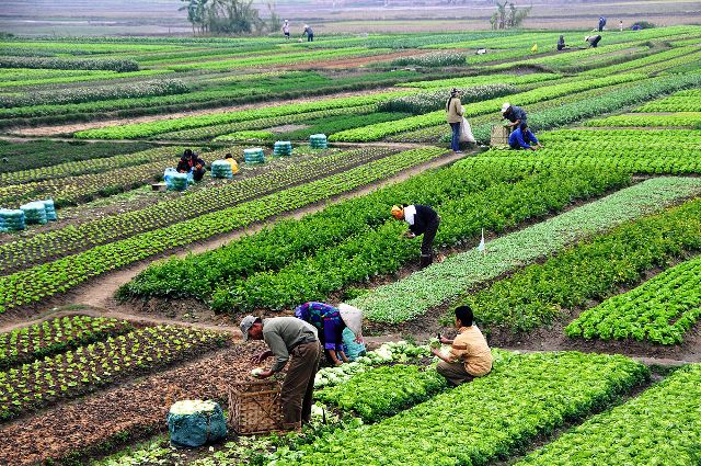 Agricultural Grants and Loans in Nigeria