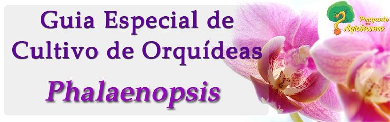 Guia Especial de Cultivo de Orquídeas Phalaenopsis ebook pdf